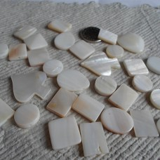 Shell ~ Assorted Ivory shapes and Sizes